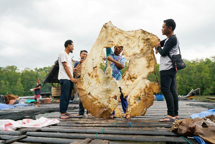 Habitantes de Bungin, uma vila pesqueira na Sumatra do Sul, segurando a pele ressecada da arraia ...