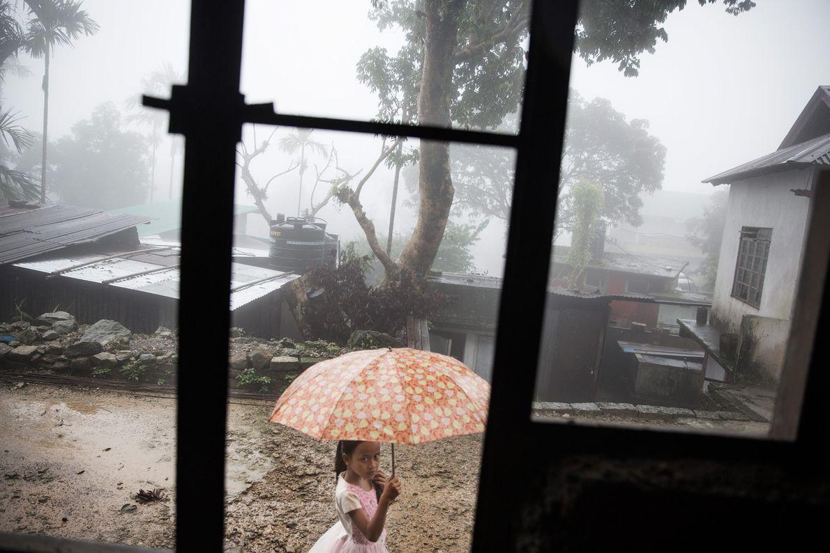 guarda-chuva-mulher-limpeza-pontes-de-raizes-vivas-meghalaya-india