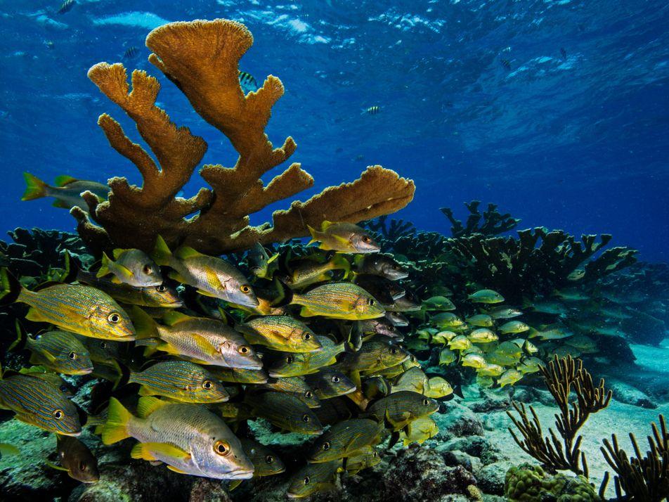 As joias submarinas de Cuba estão na rota do turismo