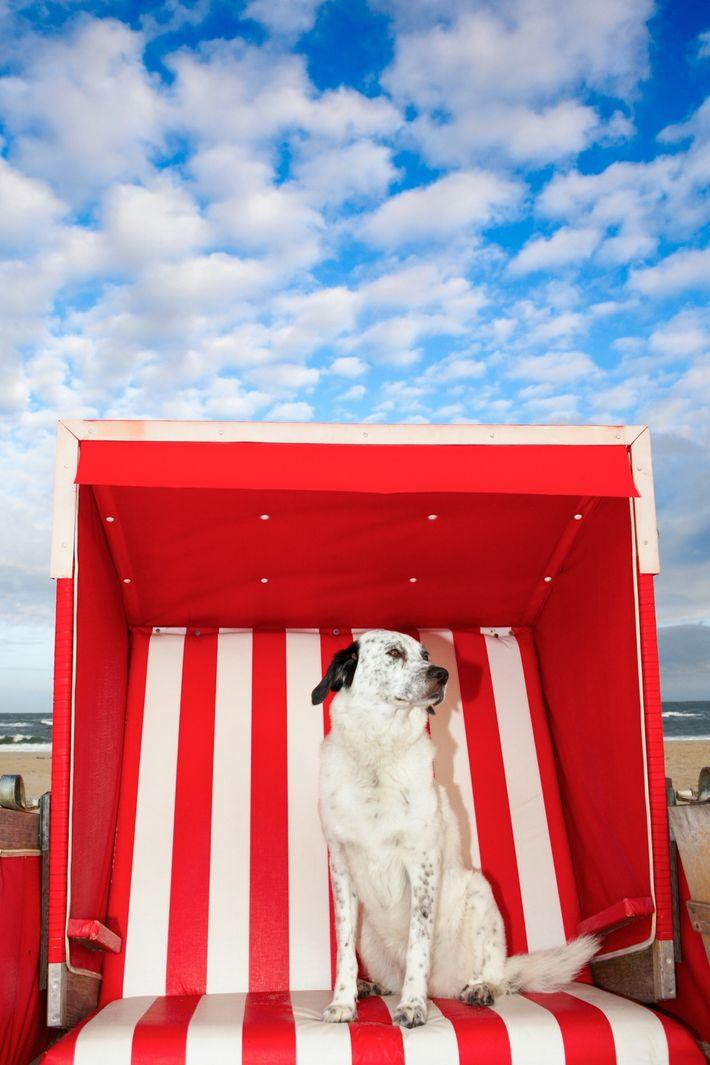 À medida que as ondas de calor se tornam mais comuns e intensas, os animais de ...