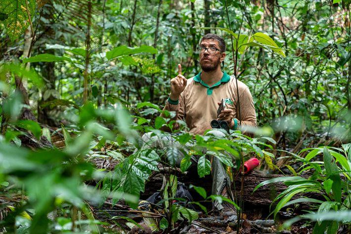 Everton Miranda ouvindo a vocalização das aves e procurando ninhos com base nas coordenadas de GPS ...