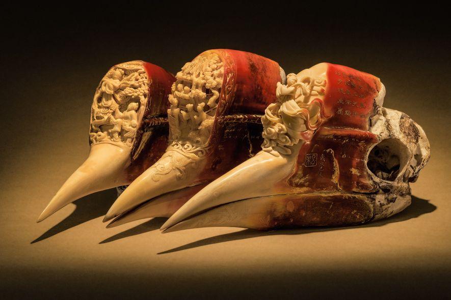 O casco do calau – a carapaça queratinosa acima do bico – é quase todo sólido. ...