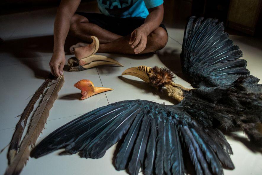 Um caçador ilegal exibe a pele e a cabeça de um calau R. undulatus (à direita), ...