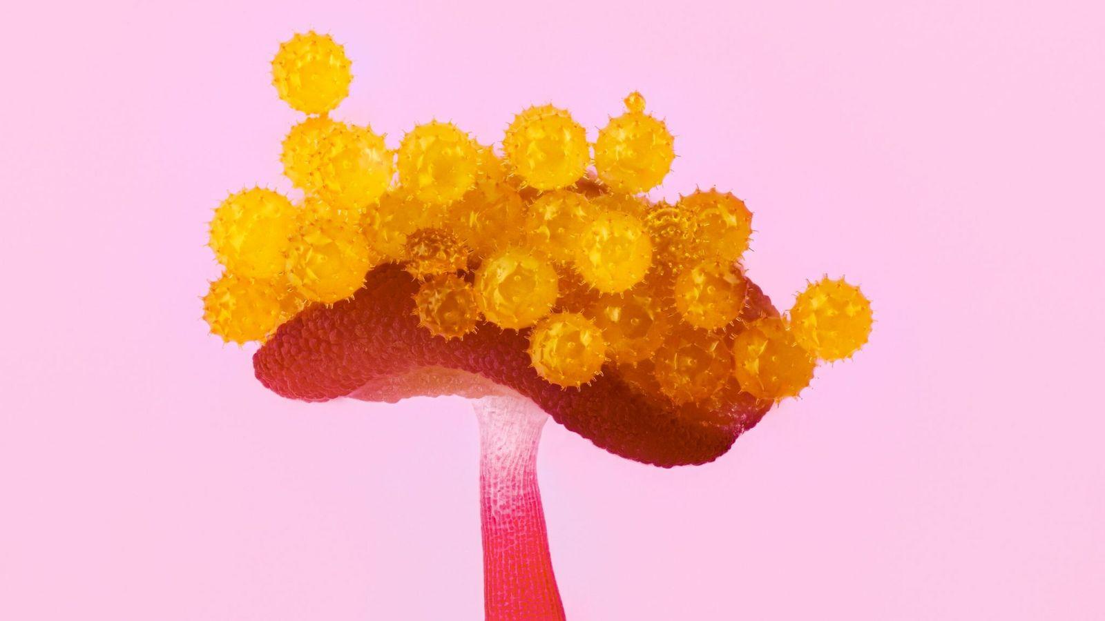 grãos de pólen amarelos sobre a ponta de uma antera de hibisco em zoom