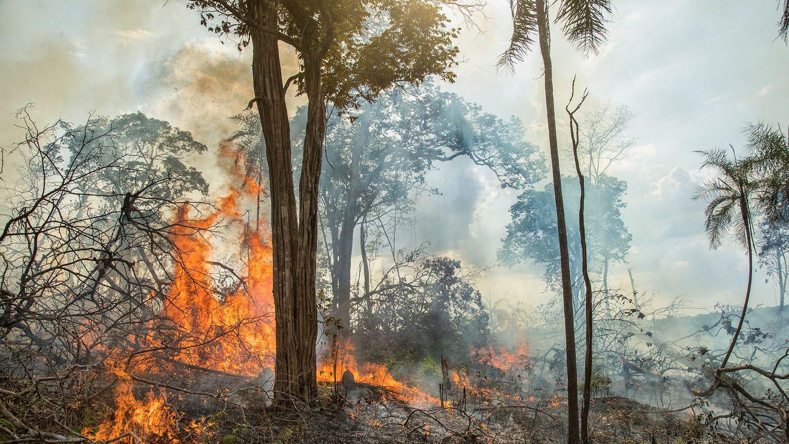 Um incêndio queima uma plantação de mandioca na Amazônia brasileira. As práticas da agricultura antiga desempenham ...