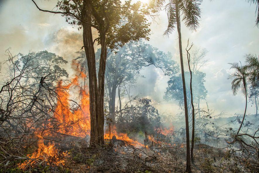 Antigos fazendeiros queimavam a Amazônia, mas os incêndios de hoje são muito diferentes