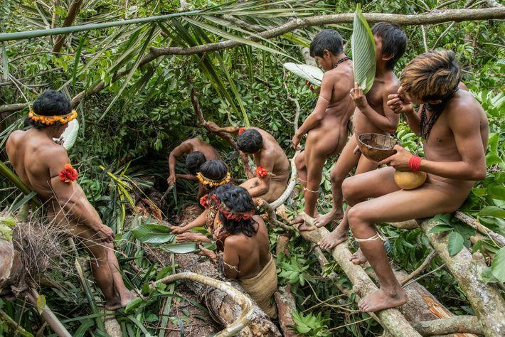 As famílias awás reúnem-se para provar mel silvestre colhido na floresta tropical.