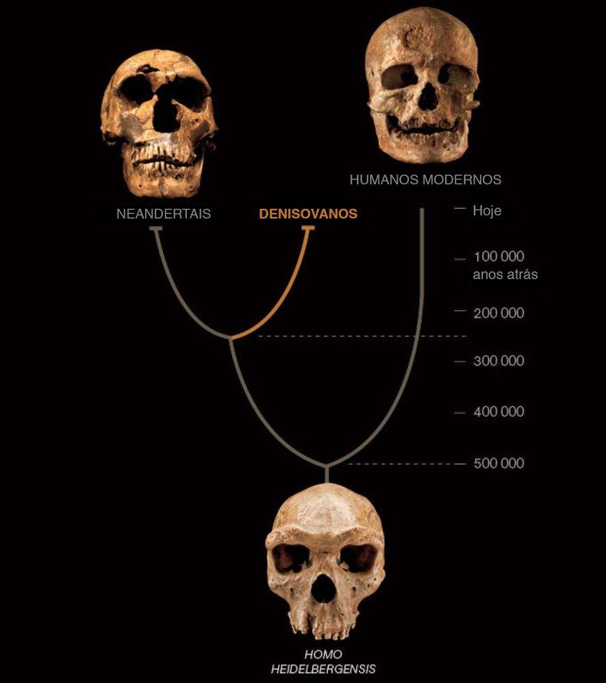 De acordo com um estudo de 2010, homens de Neandertal e de Denisova tinham parentesco próximo. ...