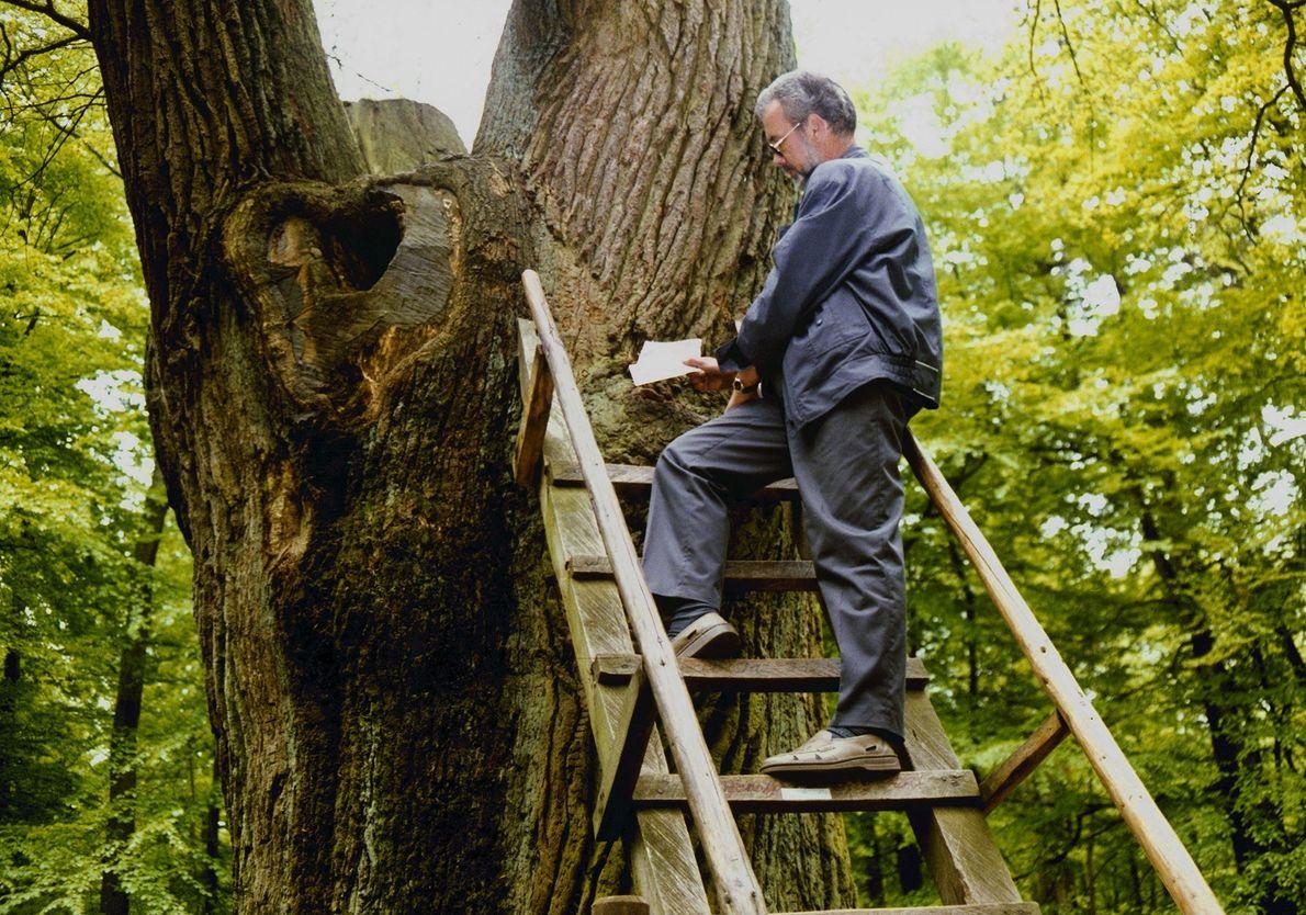 Bridegroom's Oak Tree: Eutin, Germany