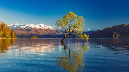 Confira a exuberância de 19 árvores emblemáticas de todo o mundo