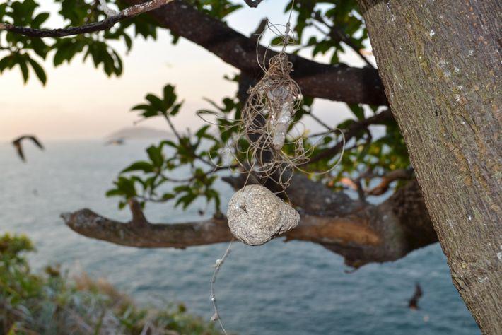 O lixo, principalmente plástico, também é um problema grave até mesmo na parte terrestre das ilhas, ...
