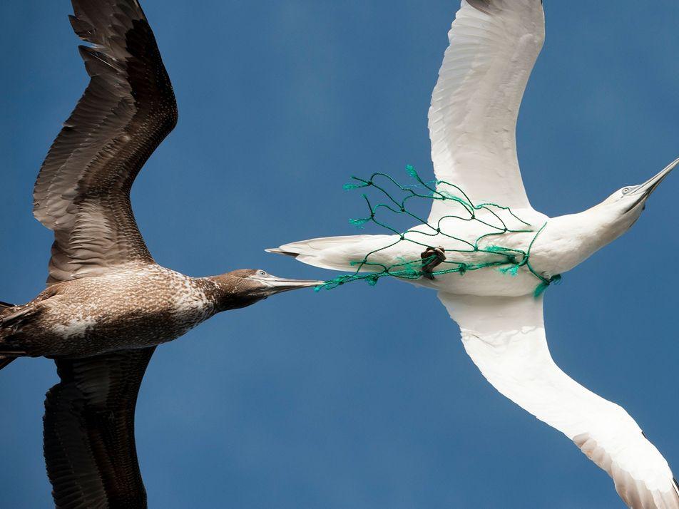 Luzes verdes podem salvar pássaros e tartarugas de redes de pesca