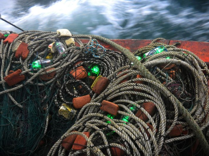 114 redes de pesca com luzes de LED a cada 10 metros foram usadas em estudos ...