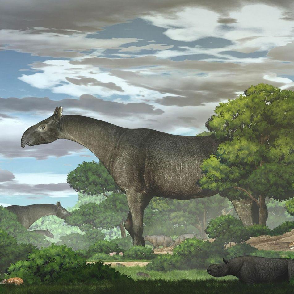 Encontrado fóssil de rinoceronte mais alto que girafa na China