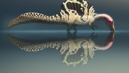 Será que o 'monstro do rio' Spinosaurus caçava como as aves pernaltas?