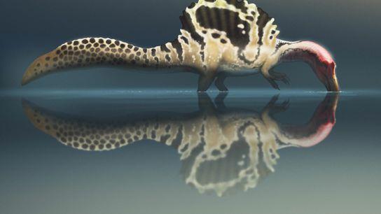 """O Spinosaurus era mesmo um """"monstro do rio"""" capaz de nadar? Na mais recente série de ..."""