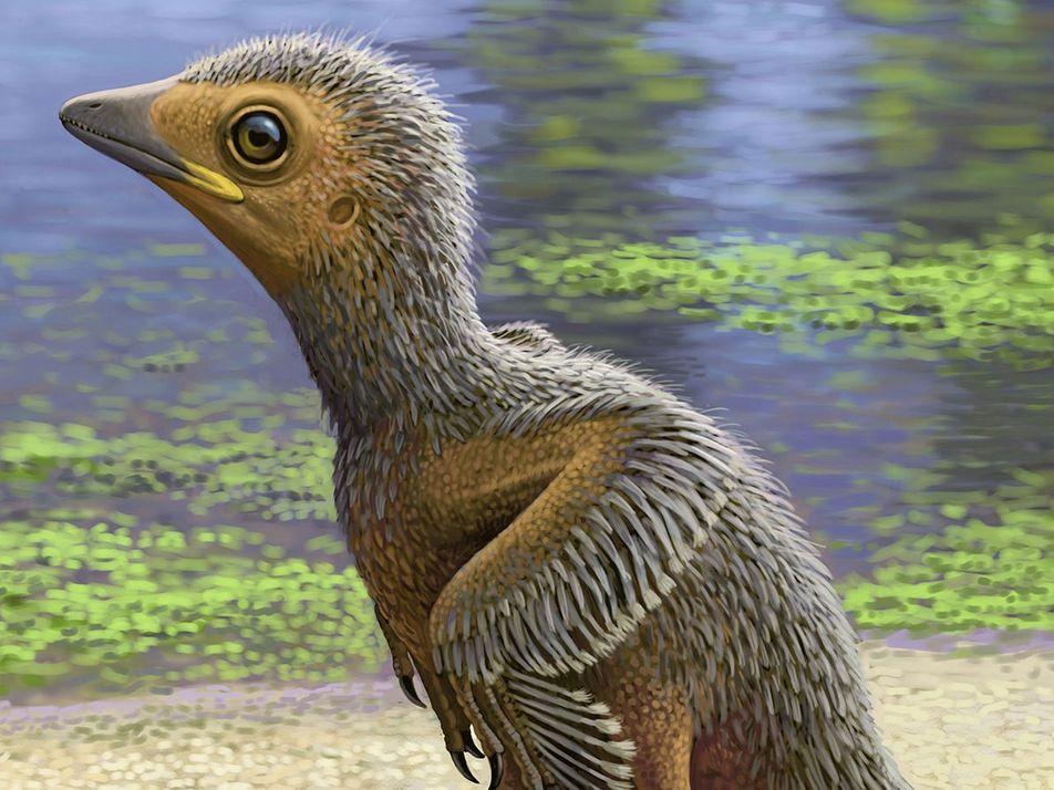 Fóssil raro de filhote de ave encontrado em rocha do Jurássico