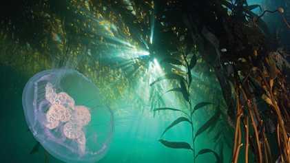 Conheça os mares intocados do Chile