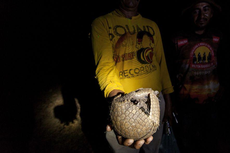 Ribeirinhos que ajudaram a equipe de pesquisa durante a expedição seguram um tatu-bola recém-capturado. O animal terá o sangue coletado e as medidas tiradas para se analisar a saúde das populações na região.