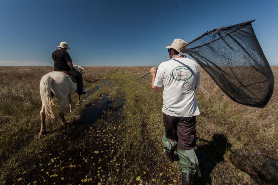 Os biólogos Matheus Volcan e Luis Esteban Lanés rondam a Estação Ecológica do Taim, que fica ...