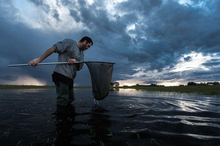 Matheus Volcan analisa a rede de mão, chamada de puçá, em busca de peixes-anuais na Estação ...