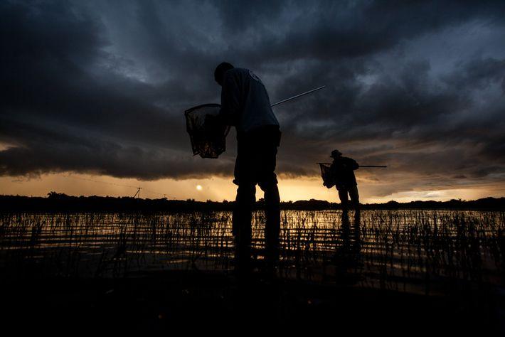 Sol se põe na Estação Ecológica do Taim (RS) enquanto pesquisadores buscam peixes-anuais em áreas alagadas. ...