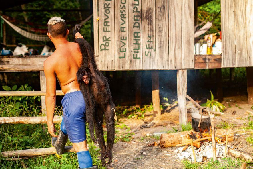 Macacos são caças comuns na área do Igarapé Amazonas, ponto de extração da castanha.