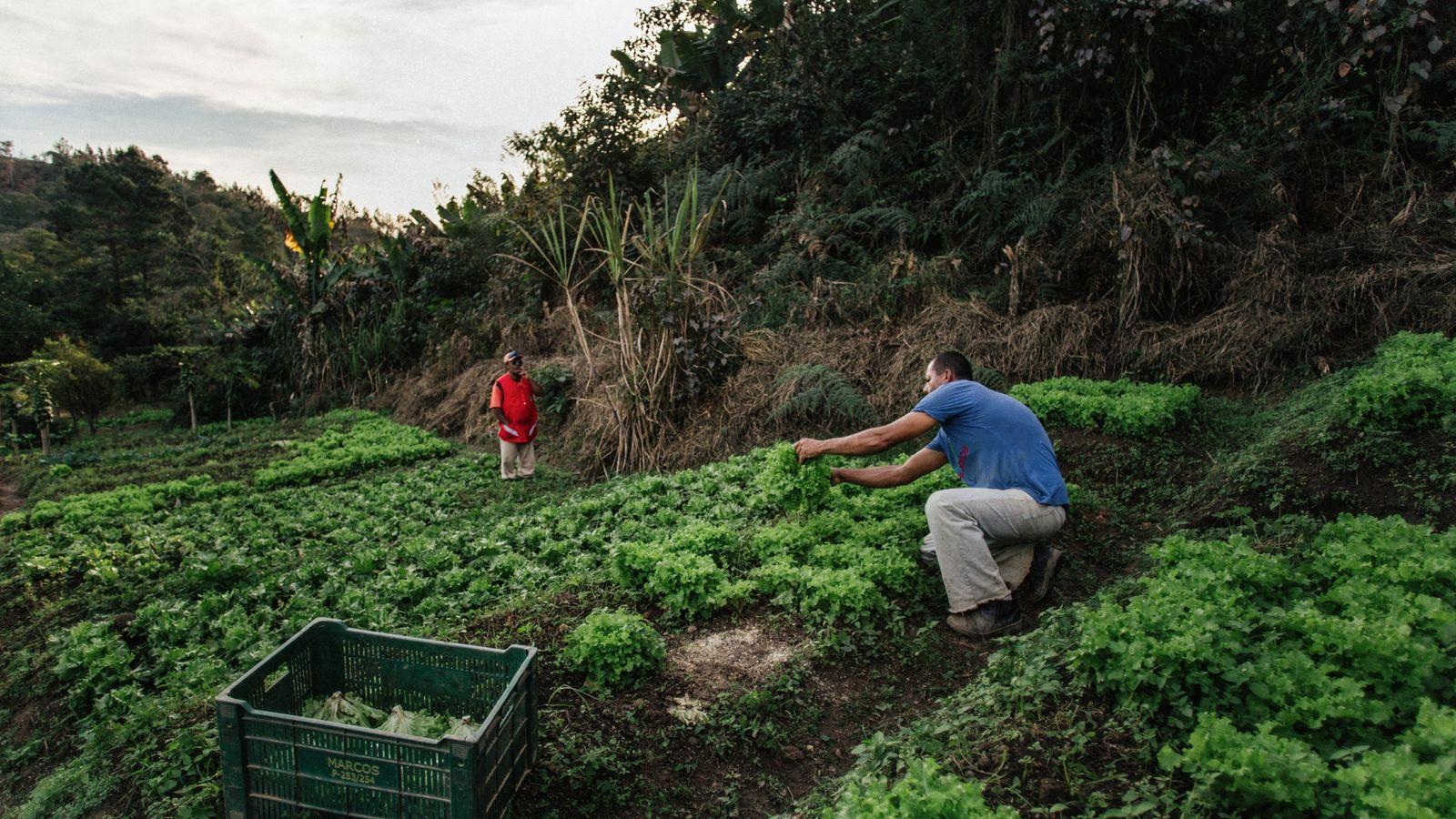 Givanildo Vieira de Lima, na frente, e Mauro Evangelista da Silva, ao fundo, trabalham a horta ...