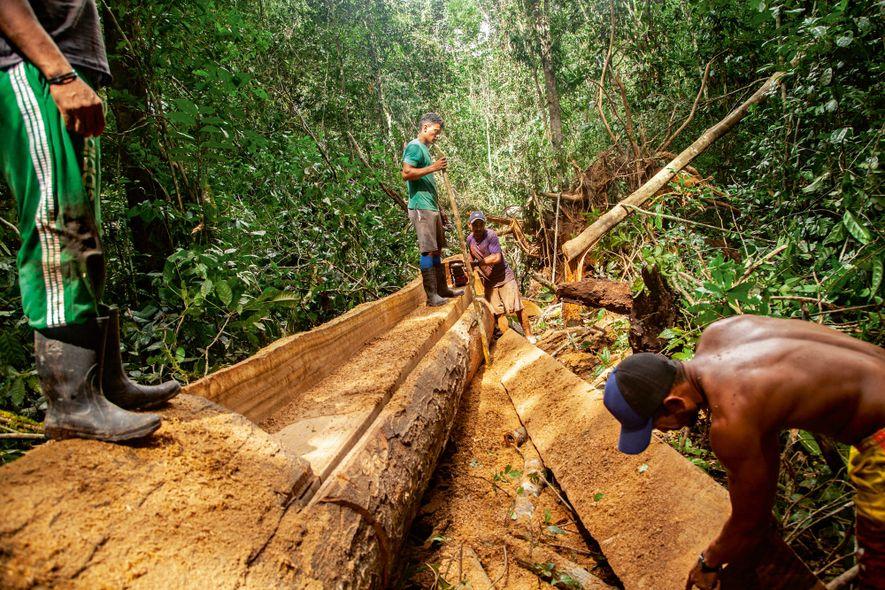 Os castanheiros do Iratapuru são reconhecidos por sua capacidade de fazer embarcações com toras da floresta. ...