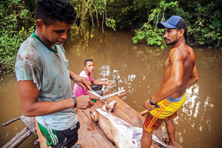 brasil-castanheiro-castanha-do-para-amazonia-amapa.