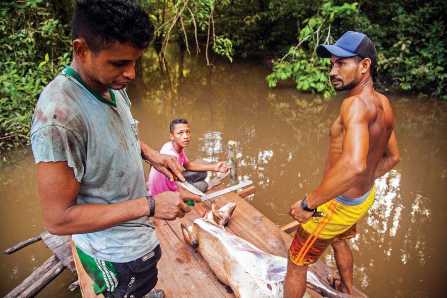 Veados também fazem parte do cardápio dos extrativistas no Igarapé Amazônia.