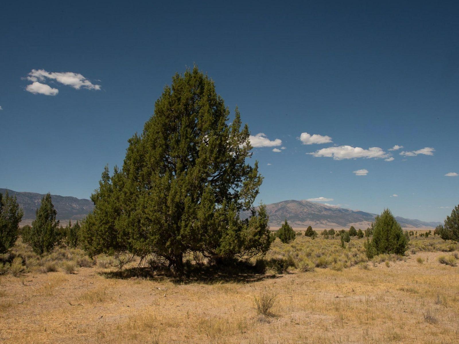 Trecho cientificamente inexplicável de tuias em pleno deserto de Nevada, nos Estados Unidos. Os povos indígenas ...
