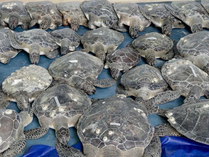 sea-turtles-texas-07