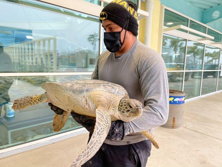 sea-turtles-texas-03