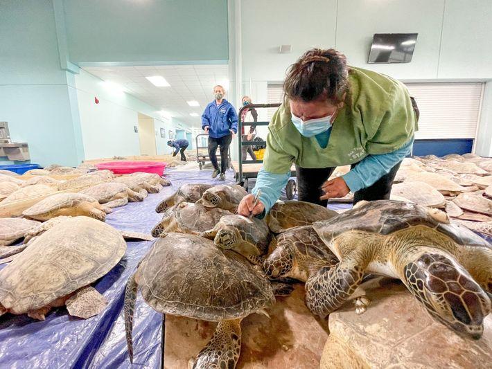 sea-turtles-texas-05