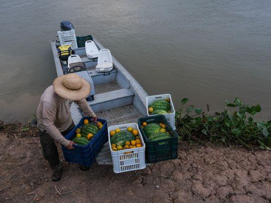 Contar mortos e alimentar sobreviventes: o trabalho no Pantanal após o fogo