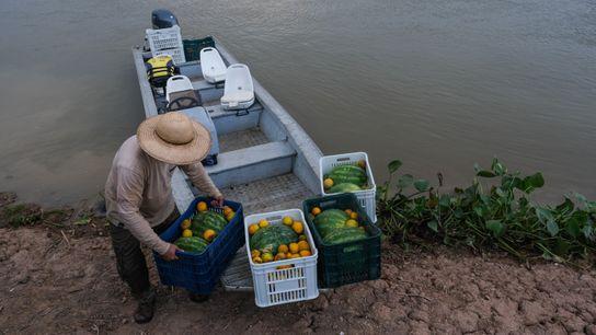 entrega de comida animais rppn sesc pantanal