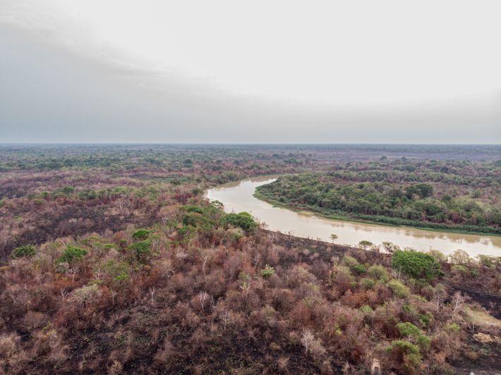 incendios-pantanal-depois-do-fogo-8