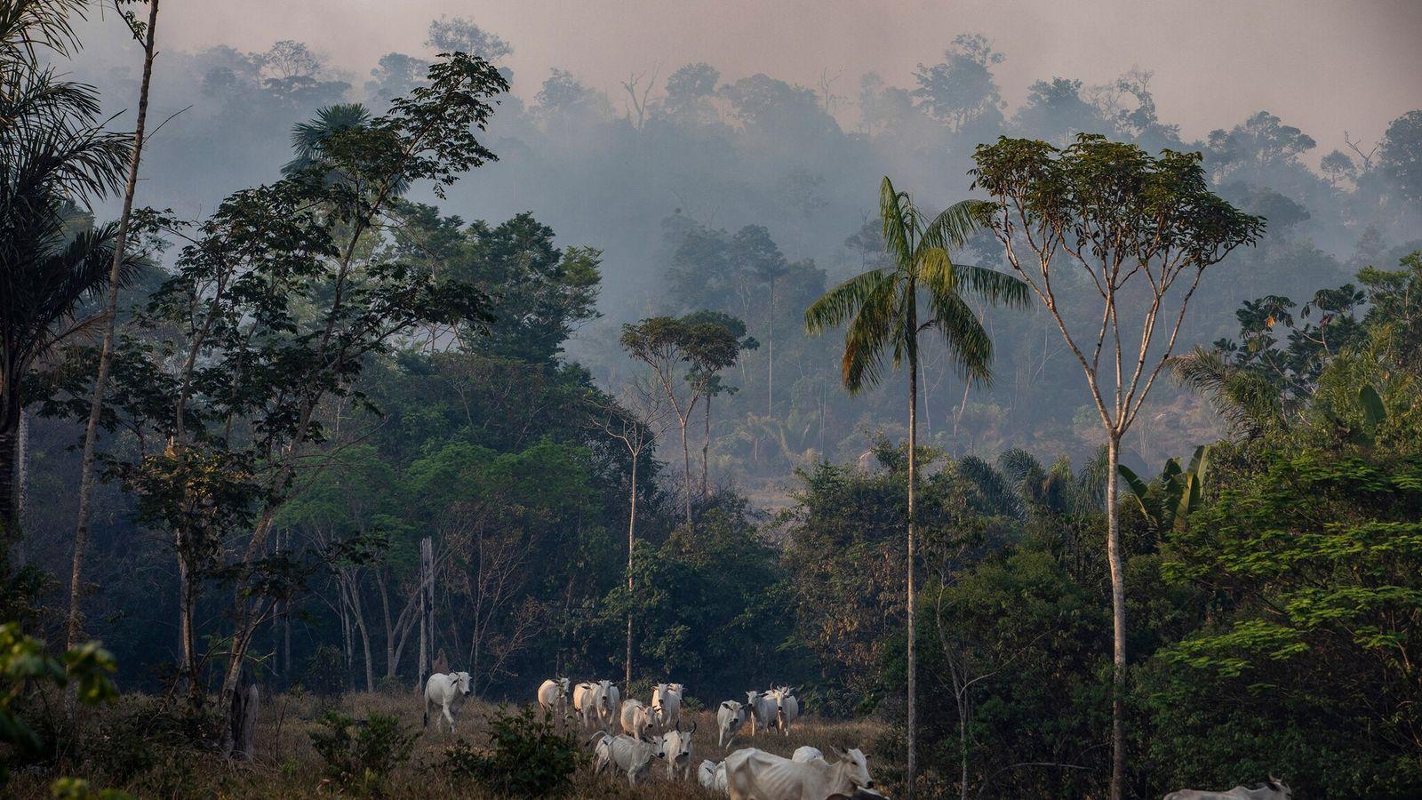 Fumaça de incêndio florestal sobre uma fazenda de gado no estado de Mato Grosso em 2019. ...