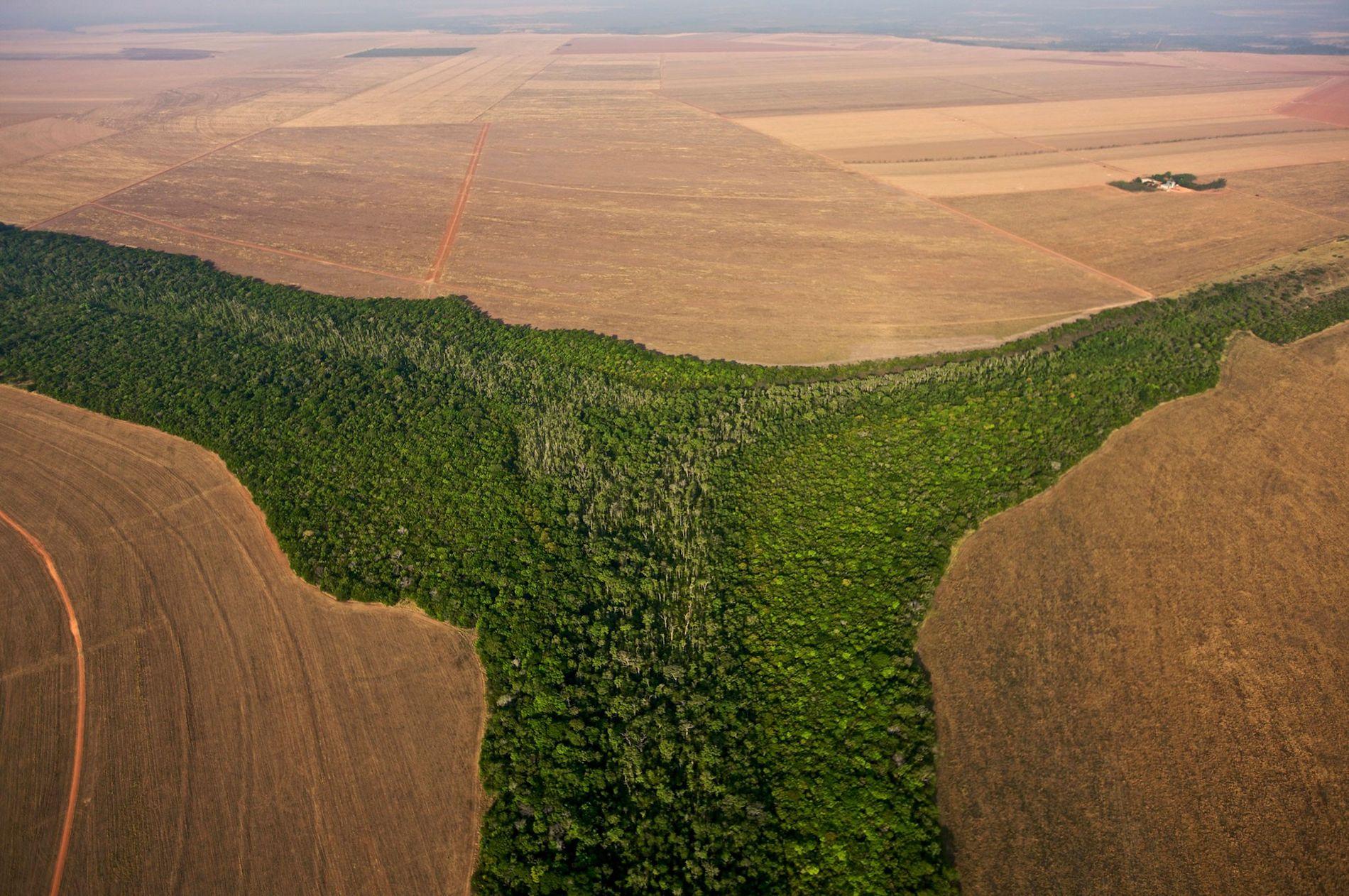 O Brasil é um dos diversos países cruciais no qual o desmatamento deve ser limitado para ...