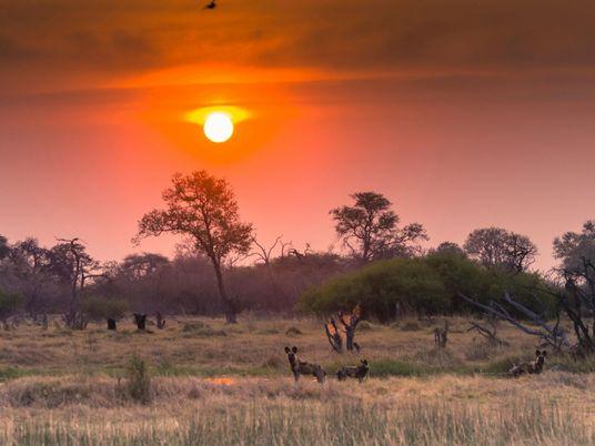 Perfurações exploratórias de petróleo são ameaça tóxica para o Okavango