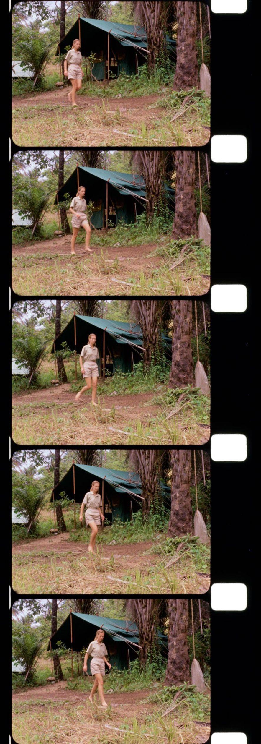 No livro My Friends, the Wild Chimpanzees, Jane relembra o seu primeiro dia em Gombe, quando ...