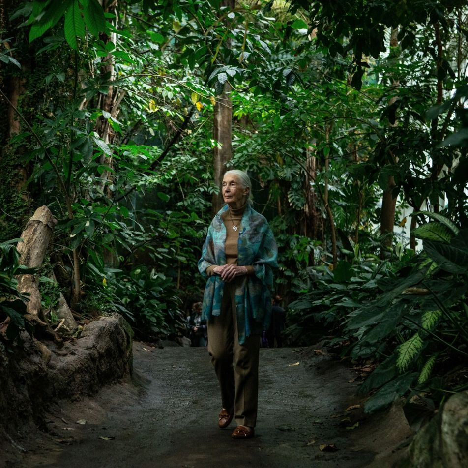 Jane Goodall se une a campanha para plantar um trilhão de árvores até 2030