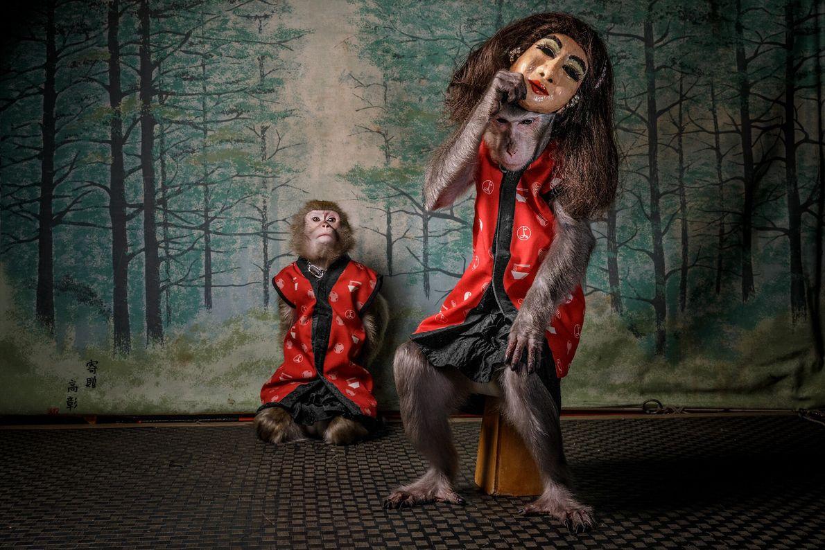 Após as refeições dos clientes de Kayabuki Tavern, em Utsonomiya, no Japão, os macacos de estimação ...