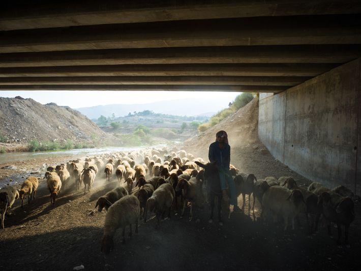 Mohamed cruza um viaduto em busca de água para hidratar seus animais no vale do rio ...