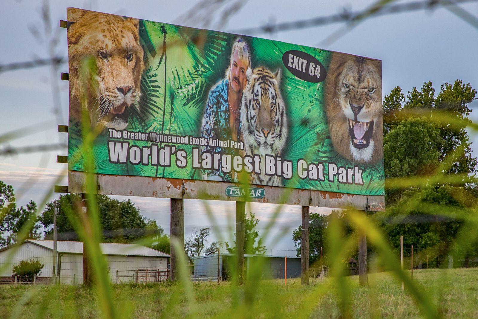 Zoológico de 'Máfia dos Tigres' reabre com multidões – felinos correm risco de contaminação