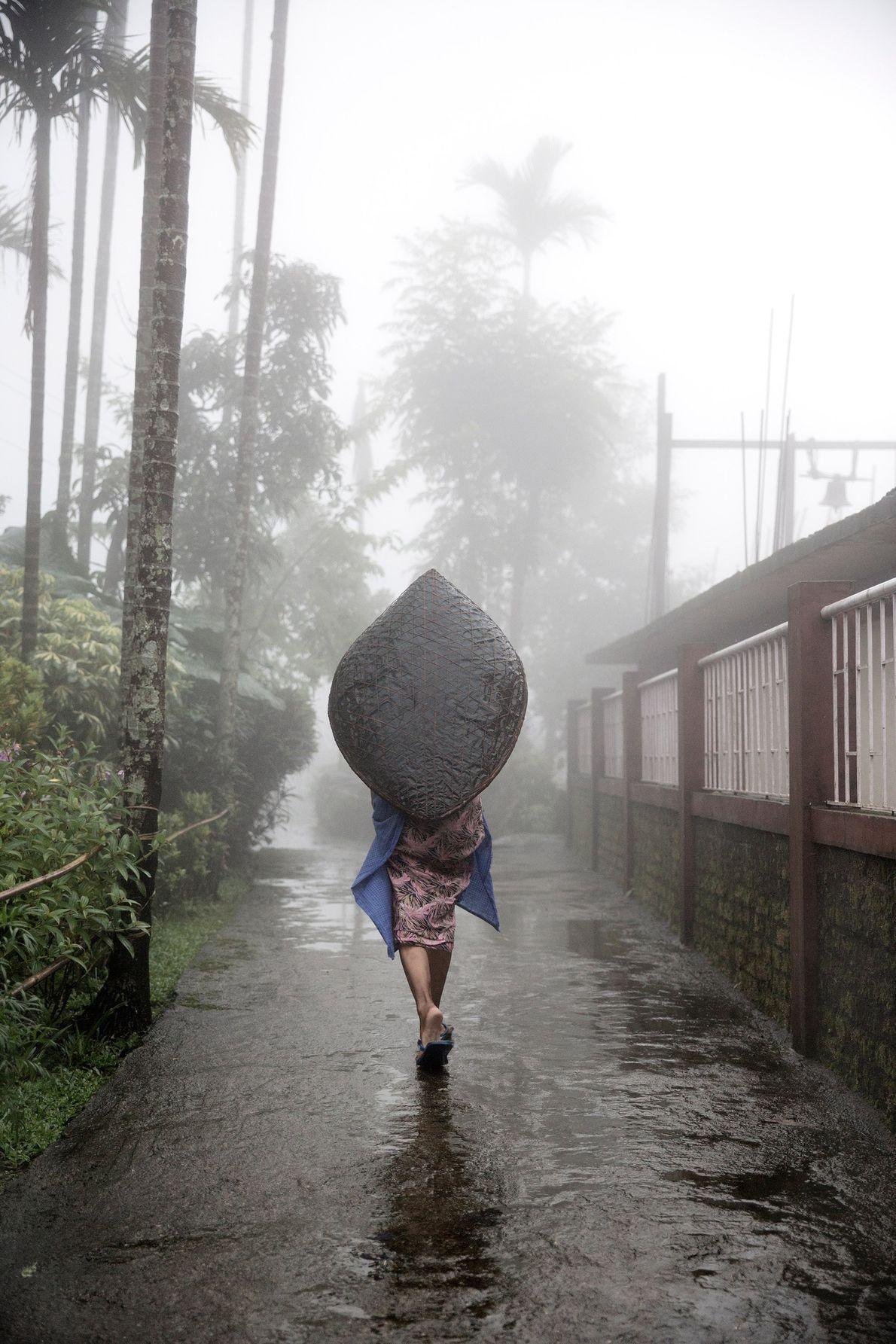 guarda-chuva-pontes-de-raizes-vivas-meghalaya-india