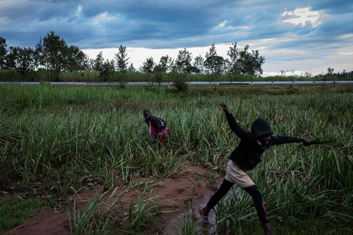 Duas meninas apanham capim em um campo pantanoso no condado de Kakamega, no Quênia. A malária ...