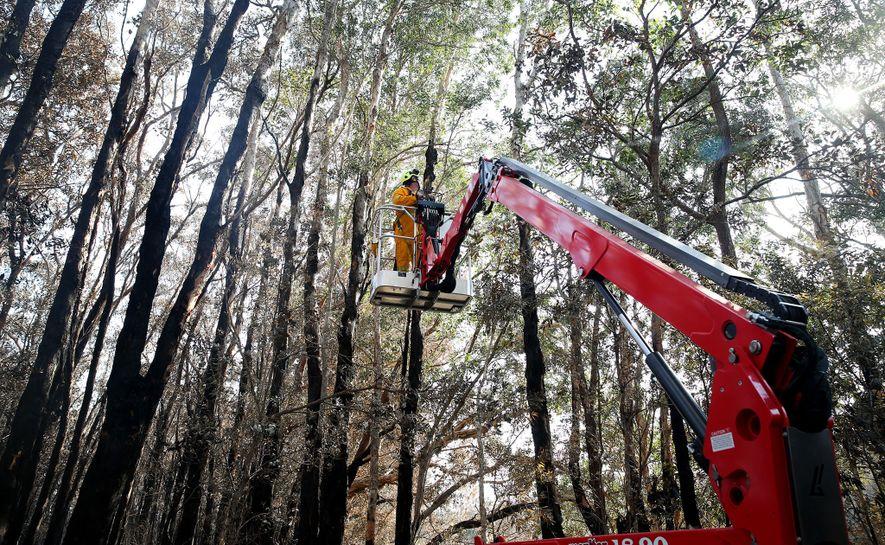 Voluntários do Hospital Port Macquarie Koala procuram por coalas feridos depois que um incêndio atingiu um ...