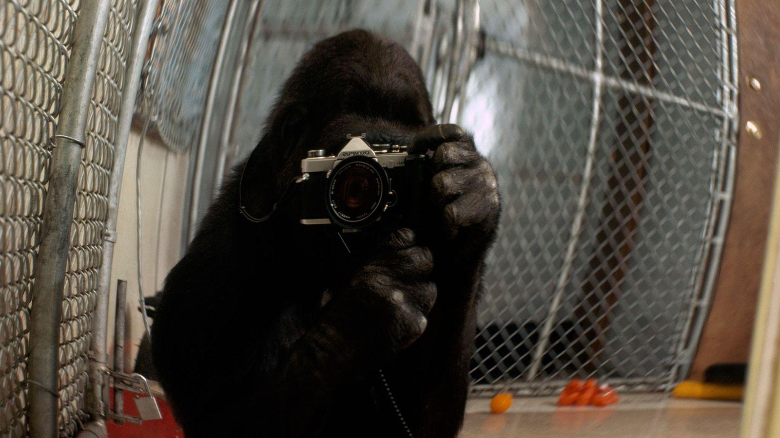 Koko tira um autorretrato com uma câmera de 35 mm.